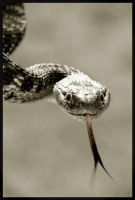 Snake by Andean-Condor