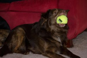Bubba and new ball. by artbylink