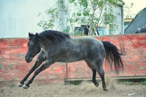 DWP FREE HORSE STOCK 64 by DancesWithPonies