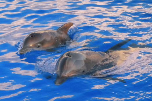 Mom and Baby Dolphin by Dolphingrl1331
