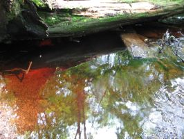 Red Water and Green Mirrors by sophiya