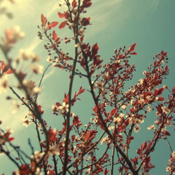 Come with me blossom tree by 1Mathew7