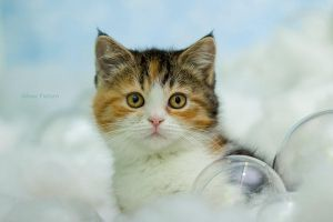 Cloud Kitten by hoschie