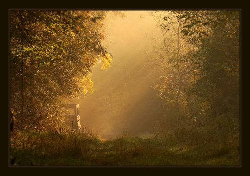Lights in the forest by SzekelyCsaba