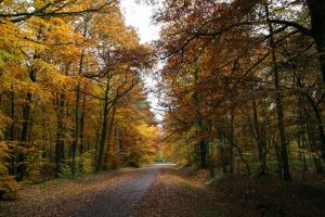 foret d automne by Artnicow