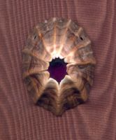 Limpet Jewel Pendent by DonSimpson