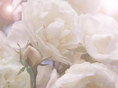 Purity by florina23