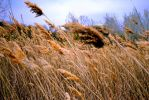 Blowing Prairie Grass by bloomingvinedesign