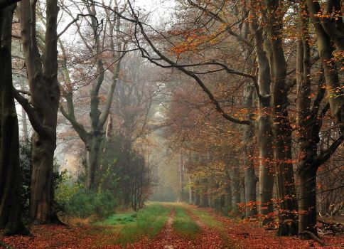 And still another autumnal memory by jchanders