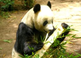 'And the Bamboo's Very Nice' by TADASHI-STATION