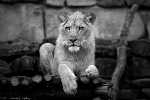 A king in process by TlCphotography730