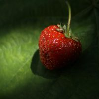 Strawberry by baraniaczek
