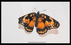 butterfly by Jimmasterpieces