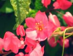 Pink Flowers with effects by Coco2204
