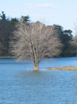 Floating Tree by candace1989