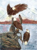 The Eagles Congregate.. by FTSArts