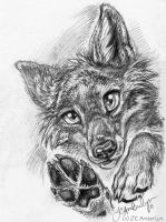 Yipper Coyote- pencil by WolfWhiskers