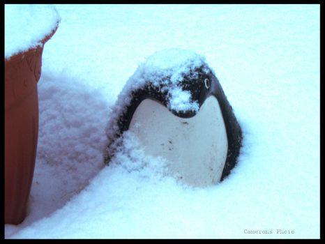 Too Cold for the Penguin by cameronsphoto