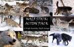 Wolf Stock: Premium Action Pack by HOTNStock