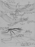 How to Draw Wings and Feathers by Theophilia
