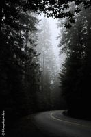 Road in fog by kayaksailor