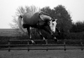 my horse... flying :D by imtl