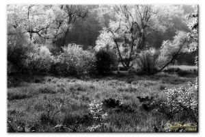 Widlnerness Dreams by bw-photography