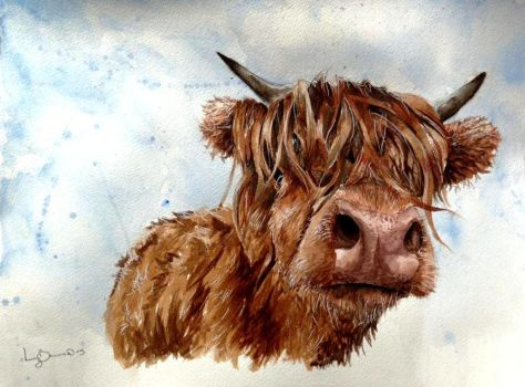 Highland Cow by 12LucyJ34