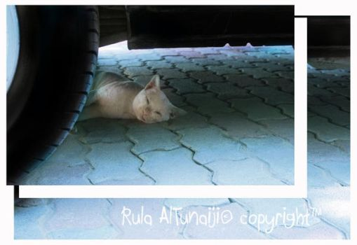 Napping under Wheel by Rolitta