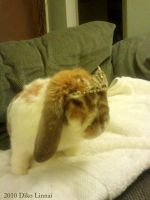 My Ginger rabbit, Butters by balba-bunny