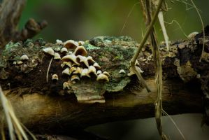 Little Fungus by Maltese-Naturalist