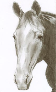 Horse pencil drawing by ChristianCowgirl116