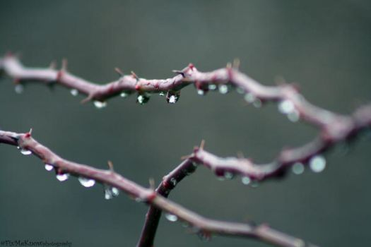 barbed wire by FixMeKnow