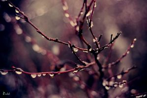 Drops by Eredel