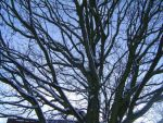 Branches Of Time by Elana-Louise