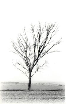 My perfect tree. by mad-dame