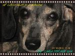 Up Close With shadow in photo negative frame by HomeOfBluAndshadows