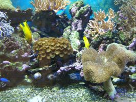 Coral Reef 4 by gwenna-stock