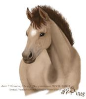 Horse - Dun foal by algy