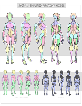 Sycra's Simplified Anatomy Model by Sycra