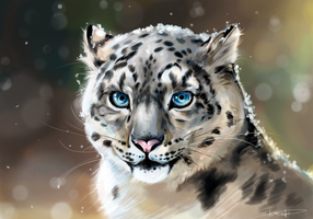 snow leopard by himriot