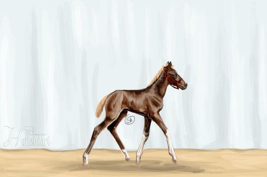 No named filly by Starblas