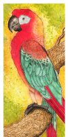 Cuban Red Macaw by Izumigee