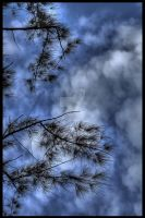 Tree and Clouds Hdr by sharan