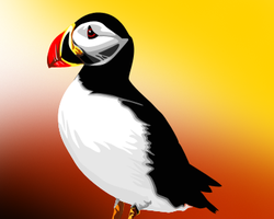 Puffin by IcedOver