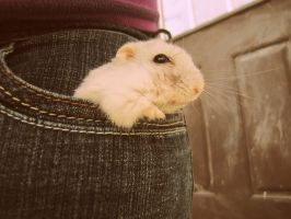 There is a hamster in my pocket by Skysofdreams