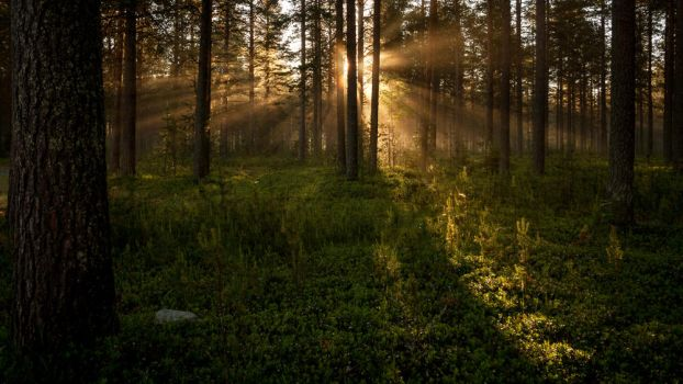Shining through the forest by Antz0