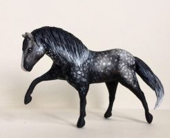 Andalusian Horse by rrombo