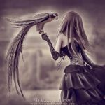 Falcon Dancer by whitewinged