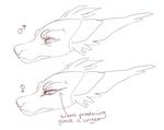 Male Female Head Comparison by LiLaiRa